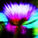 Abstract Flower by schiabor