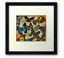 The Butterfly Collection #1 Framed Print