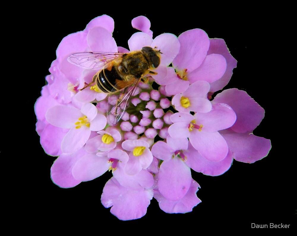 Busy Bee © by Dawn Becker