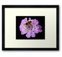 Busy Bee © Framed Print