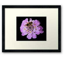 Busy Bee © Framed Print