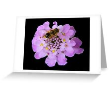 Busy Bee © Greeting Card