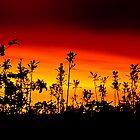 Shadow Blossoms by Mark David Barrington
