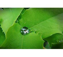 Nature's Diamond Photographic Print