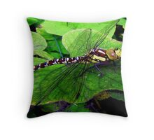 Perfect Landing Dragonfly © Throw Pillow