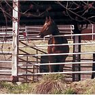 Daisy The Prettiest Horse In Town by Candy Anne Anguiano
