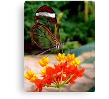 GLASSWING BUTTERFLY FEEDING ON NECTAR Canvas Print
