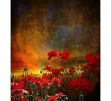 Phil's Poppies Photographic Print
