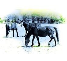 Only The Horses Photographic Print