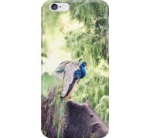 pretty boy... iPhone Case/Skin