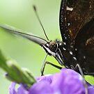 Bug Eyes by Steve Small