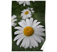 The perfect Daisy Poster