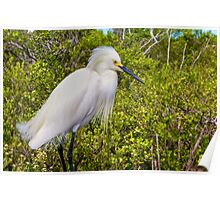 Egret Plumes Poster