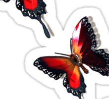 The Butterfly  Sticker