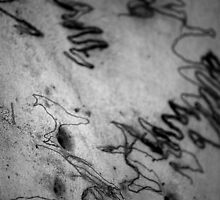 Scribbly Gum anyone? by KaPaphotography
