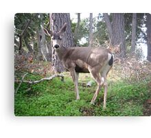 Deer Pose Metal Print