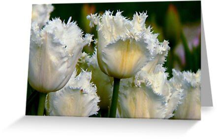 SIMPLY WHITE  PARROT TULIPS by Johan  Nijenhuis