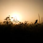 At Dawn by Anteia