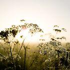 Misty Dawn by Anteia