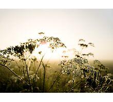 Misty Dawn Photographic Print
