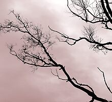 Against the Winter Sky 2 by Kristi Robertson