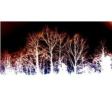 BURNED TREES Photographic Print
