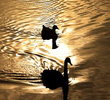 Duck Silhoutte by Kamalpreet S. Sawhney