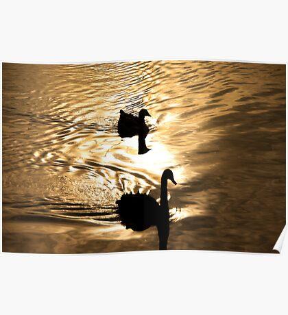 Duck Silhoutte Poster