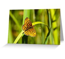 Uncommon Butterfly Greeting Card