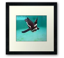 Penguin Swim  Framed Print