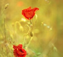 Poppy Bubbles by Donna-R