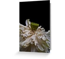 Lotus Flower Patong Beach Thailand Greeting Card