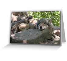Siesta for Canis Lupus   Greeting Card