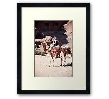 Bedouin and his camels Framed Print