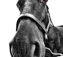 Me So Horsey! by Yhun Suarez