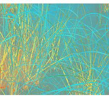 Beach Grass in Blue and Yellow Photographic Print