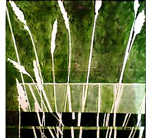 Green Monotype 1 - Printmaking Photographic Print