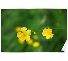 Buttercup Baby Poster
