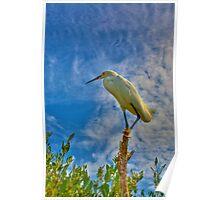 Mangrove Overlook Poster