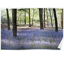 Bluebells, Green Trees - Hampshire Poster