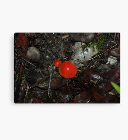 Red Toadstools in the rainforest Canvas Print
