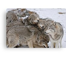Playful Wolf Pack Metal Print