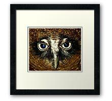 Rufous Owl  Framed Print
