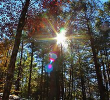 Sun Shining Through the Autumn Trees by Gilda Axelrod