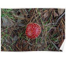 Fairy Toadstool  Poster