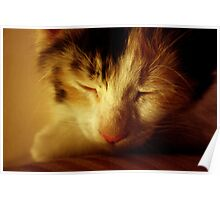 Let Sleeping Cats Lie Poster