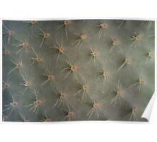 Cactus Ornament Poster