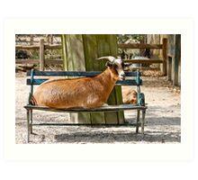 The Goat who make himself at Home Art Print