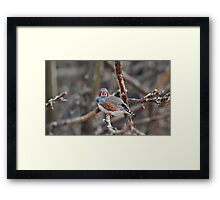 Stay where you are! Framed Print