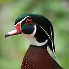 Wood Duck Up Close and Personal by TJ Baccari Photography